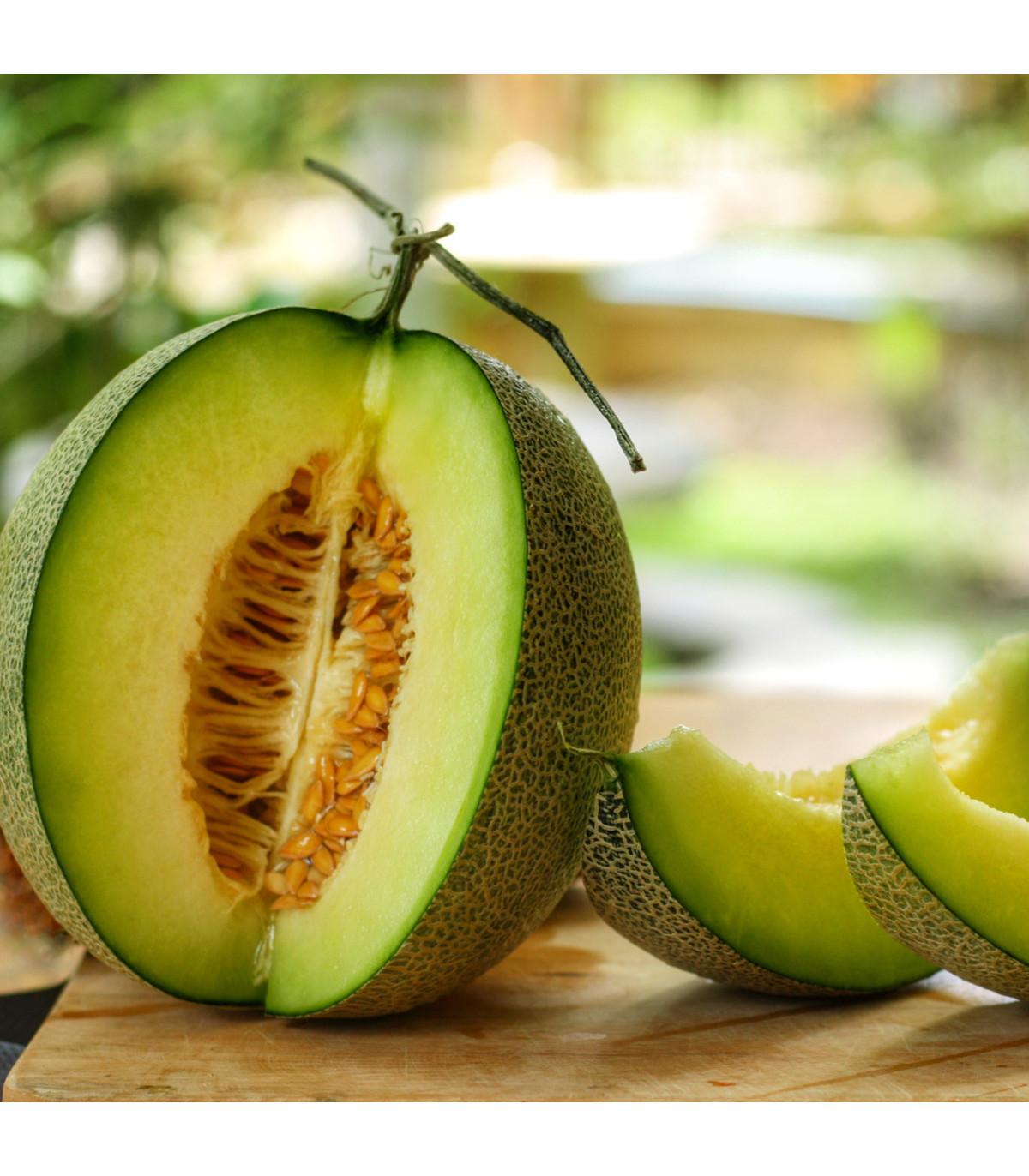 Melón galia Exelor F1 - semená melónu - 5 ks