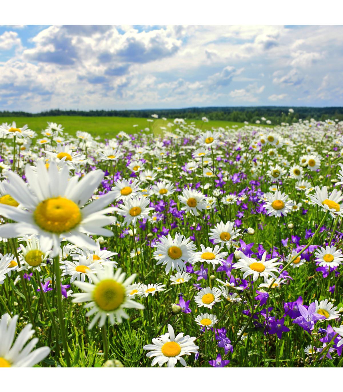 Slnečná stráň - pravé lúčne kvety - semená - 50 g